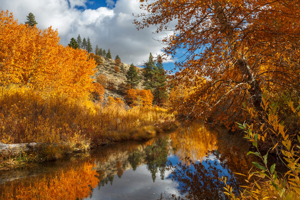 Susan River Reflections by James Q. Eddy Jr.